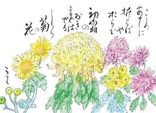 181211_菊.jpg