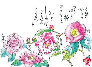 181224_つばき.jpg