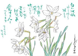190114_白花水仙.jpg
