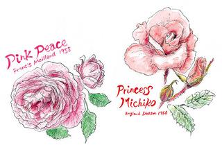 190220_プリンセスミチコ・ピンクピース.jpg