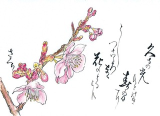 190306_桜.jpg