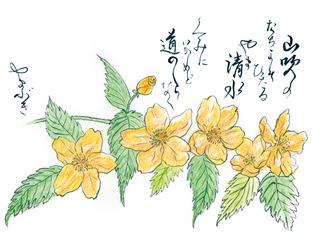 190508_やまぶき.jpg